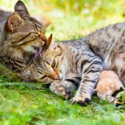 Cat family. Mom cat, daddy cat and baby on the grass