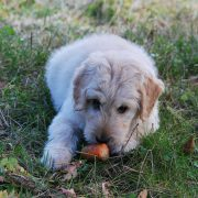 Ask an Expert: Fruits & Vegetables for Dogs | Hastings Veterinary Clinic