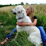 10 Outdoor Doggie Hazards to Stay Away From   Hastings Veterinary Hospital