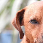 Eye Care for Pets: Our Top Tips | Hastings Veterinary Clinic