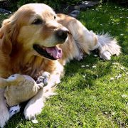 Great Tips for Summertime Dog Flea and Cat Flea Control | Hastings Veterinary Hospital