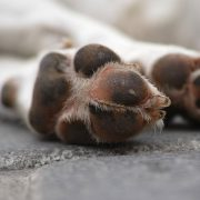 How to Protect Your Pets' Paws from Hot Sidewalks | Hastings Veterinary Hospital