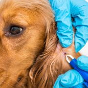 Pet Care Tips to Keep them Safe from Dangerous Tick Bites | Hastings Veterinary Hospital