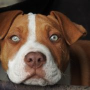 Should Pets be Adoptable in Pet Stores? | Hastings Veterinary Hospital
