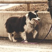 Emergency Tips to Use if Your Dog is Wounded on a Walk   Hastings Veterinary Hospital