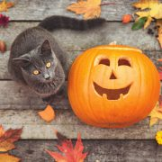 Prevention Tips for a Safe and Happy Halloween for Your Cat