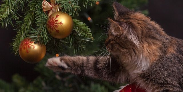 How to Keep Your Cat Happy and Safe During Christmas | Cat Care Tips | Hastings Veterinary Hospital
