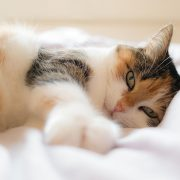 Cats Can Catch Colds Too! What to Do If Your Kitty is Sick | Hastings Veterinary Hospital