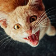 Cat Dental Care Tips & How to Clean Your Kitty's Teeth-Hastings Veterinary Hospital