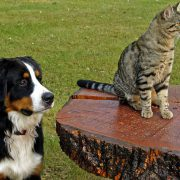 How to Prevent Pesky Parasites from Plaguing Pets & People   parasite control for pets   Hastings Veterinary Hospital
