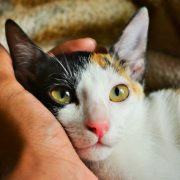 15 Reasons to Adopt a New Pet from an Animal Shelter | Hastings Veterinary Hospital
