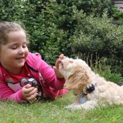 How to Choose Your First Family Dog | Hastings Veterinary Hospital