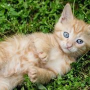 Ask an Expert: Catnip and Cats   Hastings Veterinary Hospital