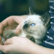 How to Prepare for Your Kitten's First Veterinary Appointment | Hastings Veterinary Hospital