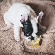 Great Gift Ideas for Pet Owners and Their Pets | Hastings Veterinary Hospital