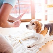 Good House Training and Crate Training Tips for Dogs | Hastings Veterinary Hospital