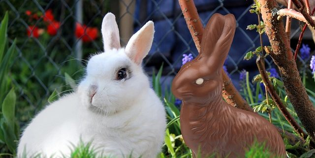 Bunny Care Tips: Why you Shouldn't Give Real Rabbits as Easter Gifts | Hastings Veterinary Hospital
