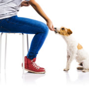 Are There Supplements/Natural Remedies that Would Help My Dog? | Hastings Veterinary Hospital