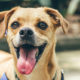 How to Choose a Name for Your Newly Adopted Pet | Hastings Veterinary Hospital