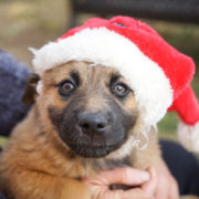 5 Ways to Prevent Holiday Dangers for Dogs | Hastings Veterinary Hospital