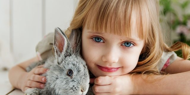 Indoors or Outdoors? Where to Raise Your Pet Rabbit   Hastings Veterinary Hospital