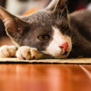 Signs Your Cat is in Pain & Needs Help   Hastings Veterinary Hospital