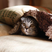 How to Tell Your Cat is Stressed | Hastings Veterinary Hospital