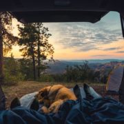Safety Tips to Go Camping With Your Dog | Hastings Veterinary Hospital