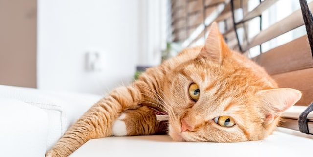How to Prevent Heat-Related Problems for Indoor Cats | Hastings Veterinary Hospital