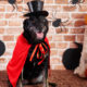 Pet Halloween Costume Dos and Don'ts