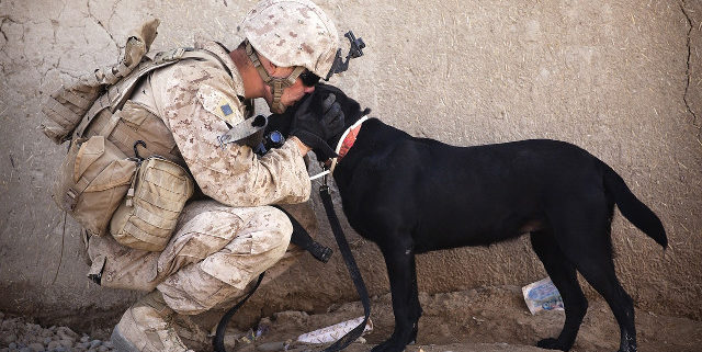 The Healing Power of Service Dogs for Our Veterans | Hastings Veterinary Hospital
