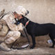 The Healing Power of Service Dogs for Our Veterans   Hastings Veterinary Hospital