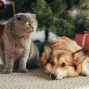 Creative Ideas to Keep Pets Out of Christmas Decorations   Hastings Veterinary Hospital