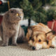 Creative Ideas to Keep Pets Out of Christmas Decorations | Hastings Veterinary Hospital