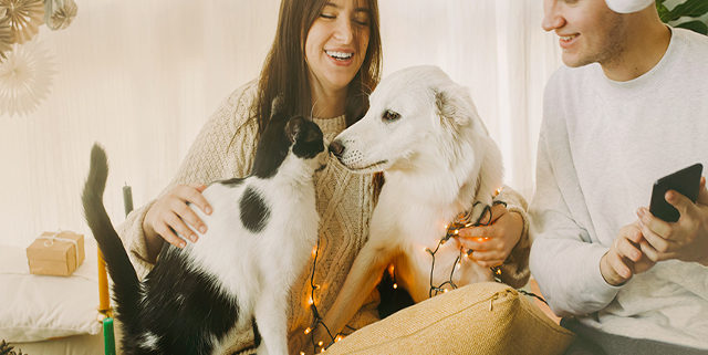 Top 5 List of Gift Ideas for a Pet Lover this Christmas | Hastings Veterinary Hospital