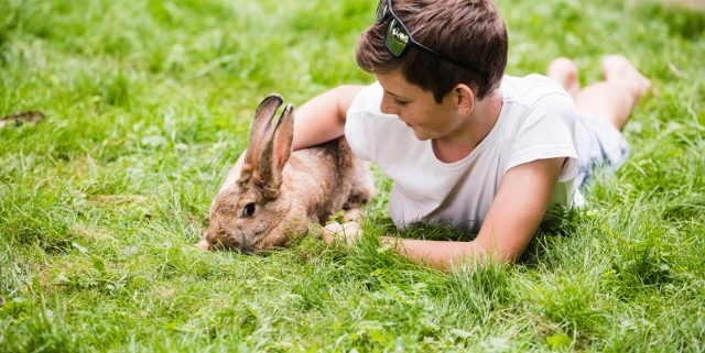 9 Reasons Why Bunnies Make Great Pets | Hastings Veterinary Hospital