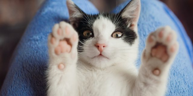 How to Motivate Your Cat to Take their Medicine | Hastings Veterinary Hospital