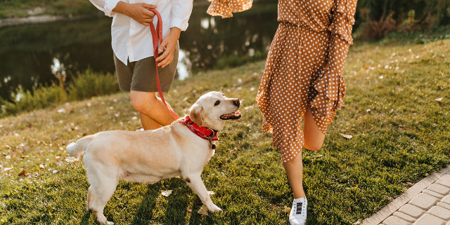 Preventive Medicine for Pets: Why We Do What We Do | Hastings Veterinary Hospital