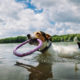 Can All Dogs Swim? And Other Dog Swimming Tips Worth Knowing | Hastings Veterinary Hospital