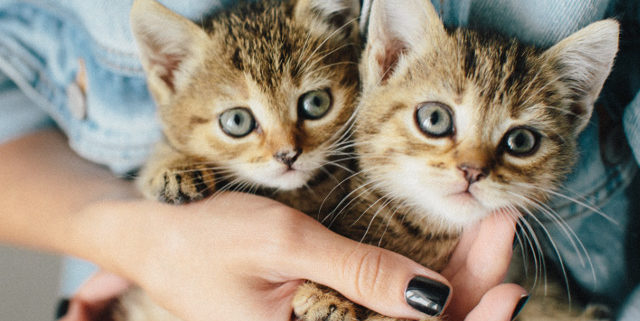 The Benefits of Pet Insurance You Need to Know About | Hastings Veterinary Hospital
