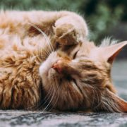 Why is My Cat Coughing and Wheezing? | Hastings Veterinary Hospital